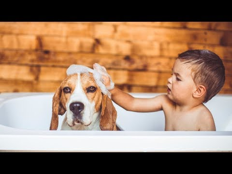 Top 10 Dogs Breeds for Kids