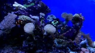 HTC One X аквариум, штатная камера