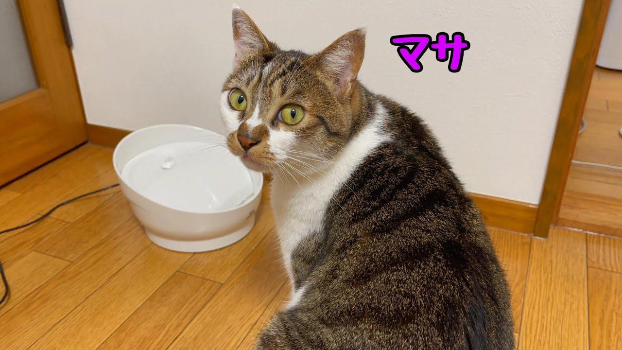 新しい給水器を前に助けを求める猫。動画後半はマサの日常の様子をご覧下さい。