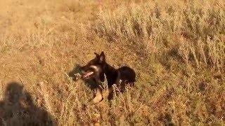 видео Купить наклейку Elk Master (12,5 мм) в Могилеве в интернет-магазине