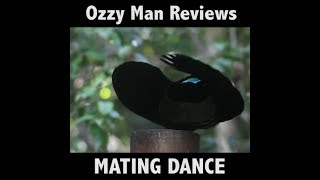 Ozzy Man Reviews: Bird discovering Dab