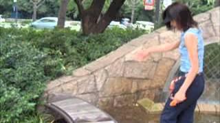 you tubeでおなじみのウィペットのアレスちゃん(1995-2010)の綱(?)...