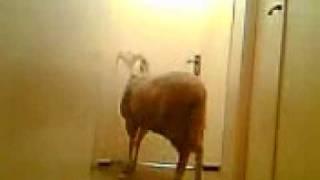 un kabche avec une porte