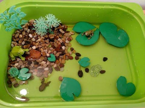 Frog Life Cycle Activities for Children- Sensory bin fun!