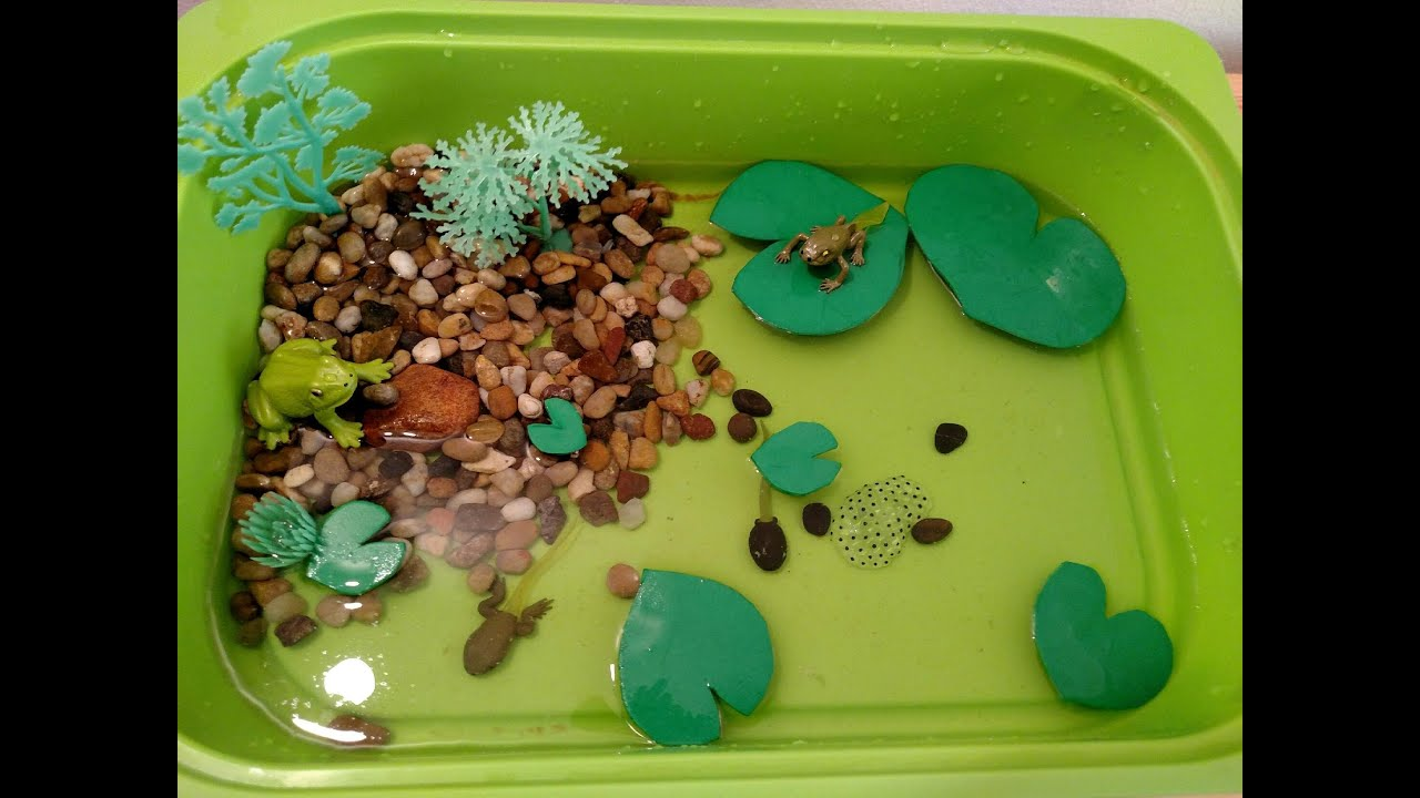 Frog life cycle activities for children sensory bin fun for Frog crafts for preschoolers