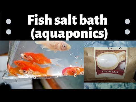 Giving Fish A Salt Bath/ Salt Treatment Using Epsom Salt- (hybrid Aquaponics)