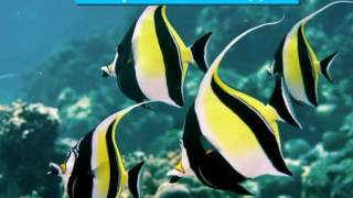 Топ 5 интересных рыб