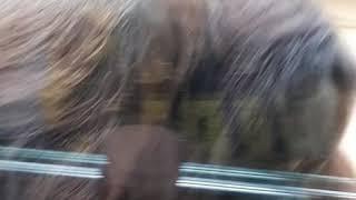 Ижевск зоопарк. Смешные обезьяны