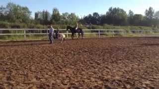 Верховая езда. Лошади и пони. Обучение.