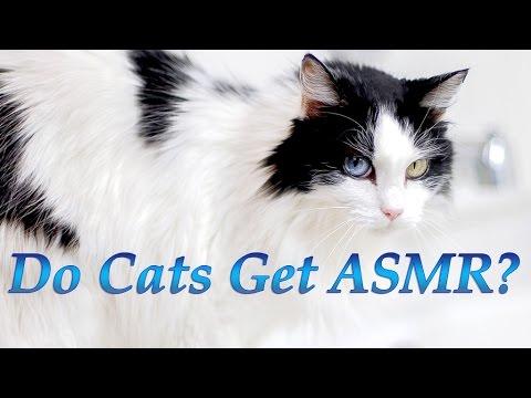 asmr kitten