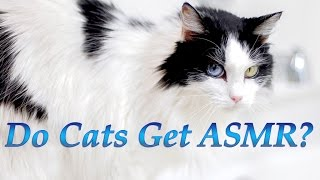 do cats get asmr cat react to heather feather asmr binaural microphone test video