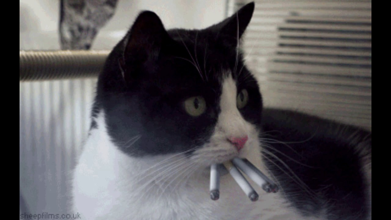 сорт фото кота с сигаретой в зубах напоминает дешевый бордель
