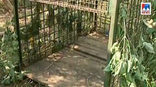 thrissur - leopard