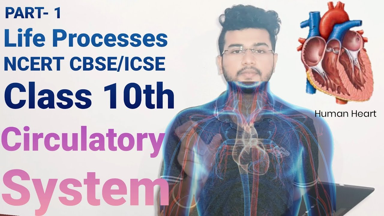 Heart   Human Circulatory System   Introduction to Life ...