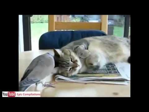gatti buffi da