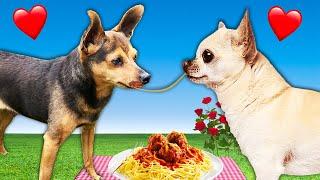 Best First Date Wins Kiss!  PawZam Dogs