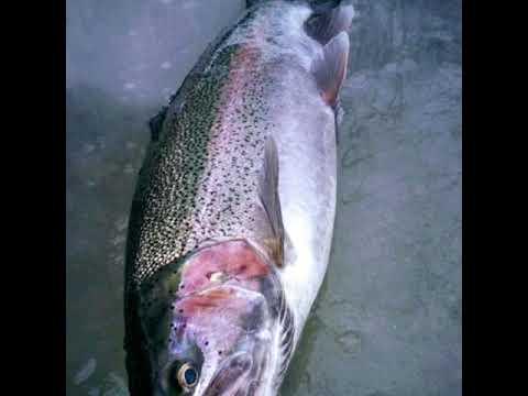 DUNKIRK NY FISHING