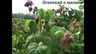 Выращивание малины. Выбор почвы. Внесение удобрений(Видео подготовлено садовым центром Greensad по материалам передачи