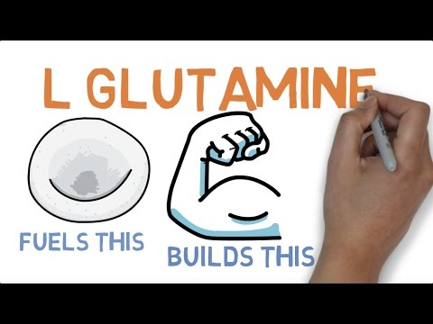 L GLUTAMINE: WHAT DOES GLUTAMINE DO