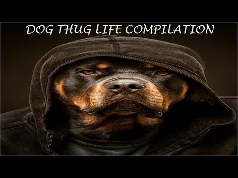 Thug Life - Dog Edition (in HD!!!)