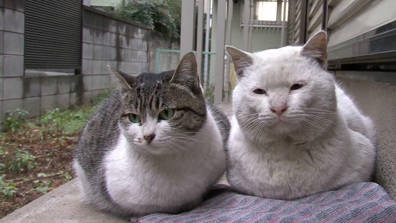 子猫でも野良猫に優しくしてはいけない2つの理由 - 野良猫撃退SOS!