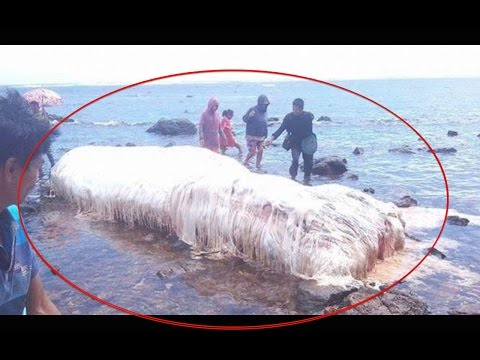 STRANGE GLOBSTER WASHED UP ON DINAGAT ISLAND, PHILIPPINES | Oarfish predict earthquake, Trunko?