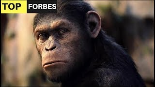 Chimpanzee Facts - Top 10 Facts About Chimpanzees