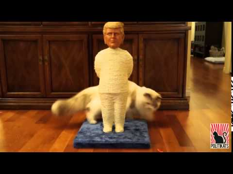 Who let the cats out?!? - A Politikats Original