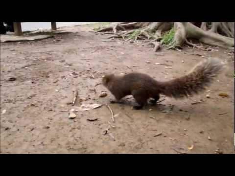 台北二二八和平公園リス2  228 Peace Memorial Park squirrel