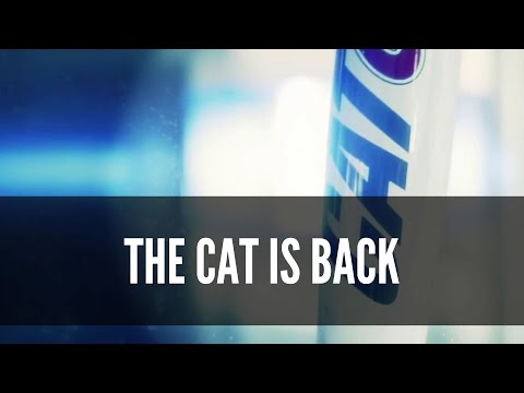 THE CAT IS BACK