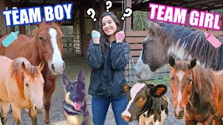 ALL MY PETS GUESS The Baby's GENDER!!!