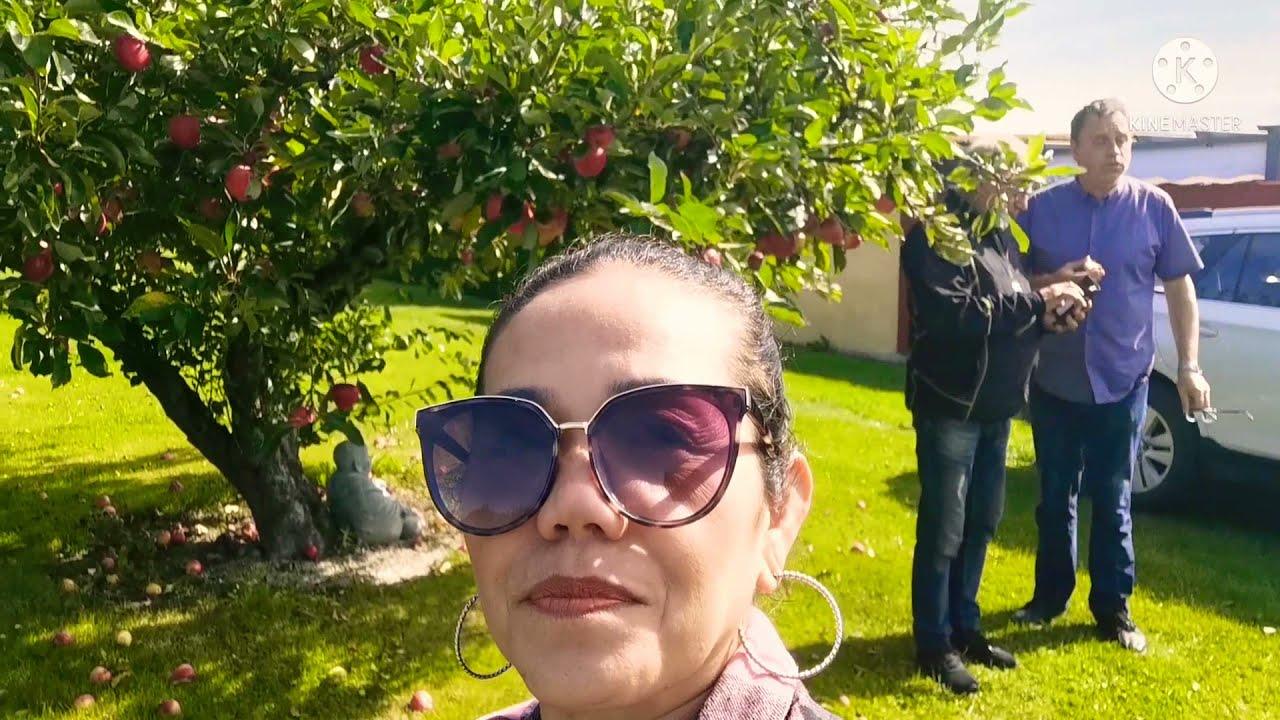 ไปหาเพื่อนฝรั่งเก็บองุ่นในสวนกันนะคะมีผลไม้ให้ดูเยอะแยะเลยค่า ep1