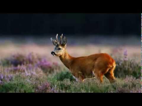Jaak Tuksam - Meil on elu keset metsa