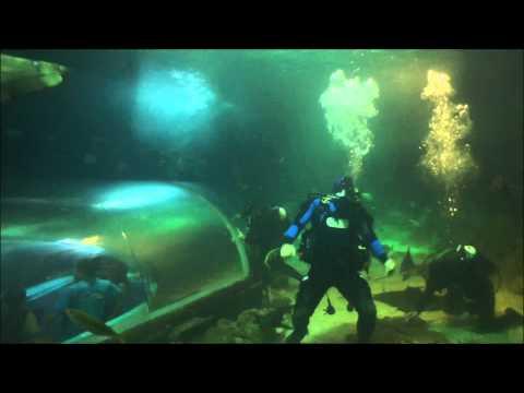 Harlem Shake (Sydney Aquarium Scuba Diving Underwater Edition)