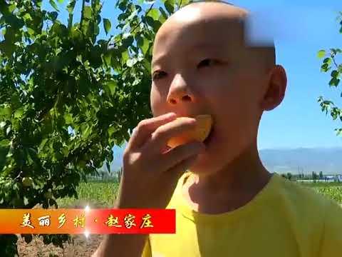 忻州:山西省忻州市繁峙县白水大杏原生态产品宣传片