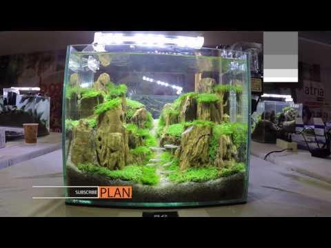 Aquascape Contest - A'Combat Tank 300
