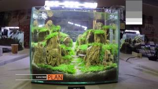 Aquascape Contest - A'Combat Tank 300