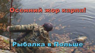 Украинцы в Польше Рыбалка на карпа поплавочной удочкой