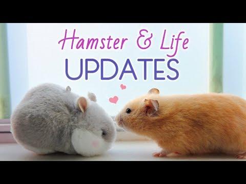 Kashi Updates & Life Updates! 🐹 😊