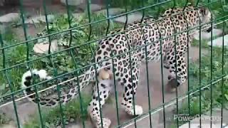 НАЙБІЛЬШИЙ приватний зоопарк ЛІМПОПО???????????? / Видео