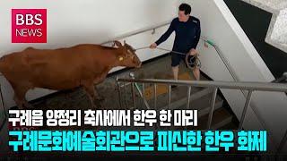 [BBS뉴스] 구례문화예술회관으로 피신한 한우 화제..…