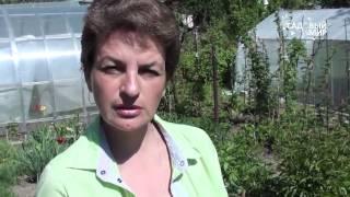 Защита смородины и крыжовника от тли и смородиновой огневки(, 2014-05-23T07:48:32.000Z)