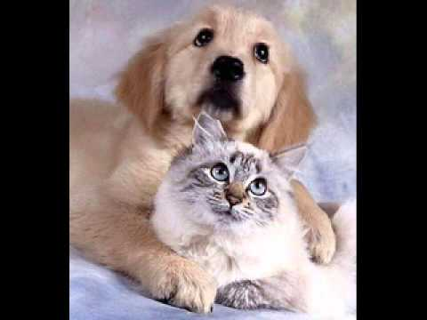 dog cat sing 2013 happy new year song
