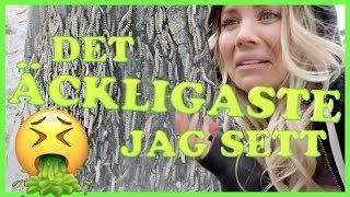 DET ÄCKLIGASTE JAG SETT!   vlogg