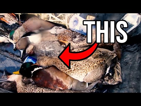 Why You SHOULD Duck Hunt In California | Duck Hunting For Beginners