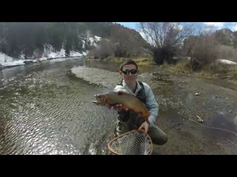 Fly Fishing the Taylor, Gunnison, and South Platte Rivers