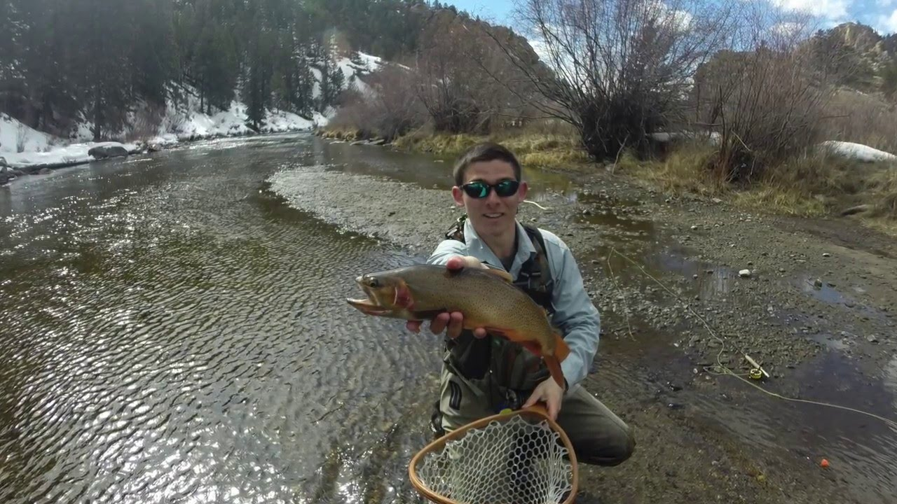 Fly fishing the taylor gunnison and south platte rivers for Gunnison river fly fishing