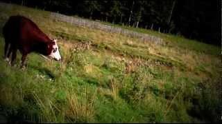 Musique relaxation, la vache, panorama, paysage, vidéo reposante et relaxante
