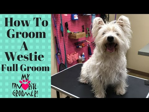 How to Groom a West Highland White Terrier