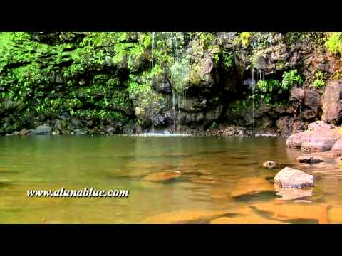 Stock Video - Tropical 03 clip 09 - Stock Footage - Video Backgrounds